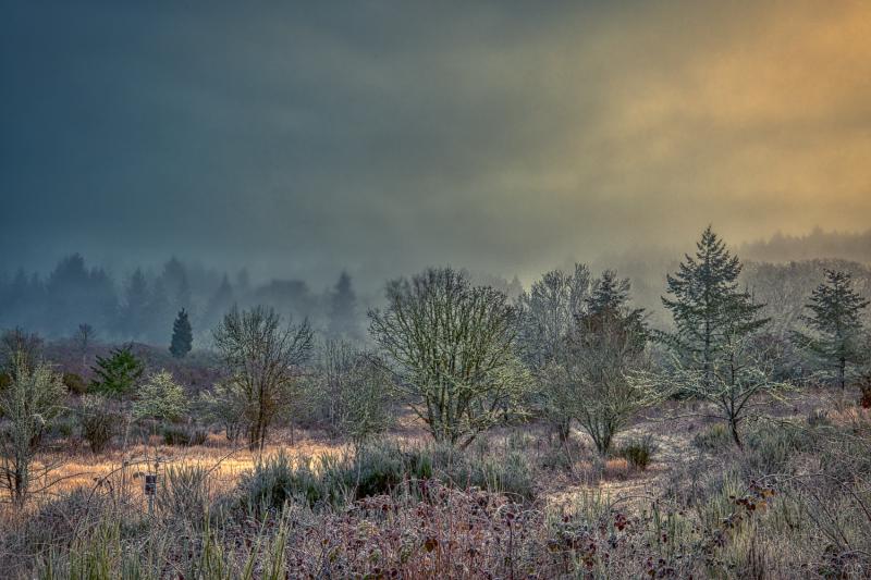 """Foggy Morning, Painterly"""