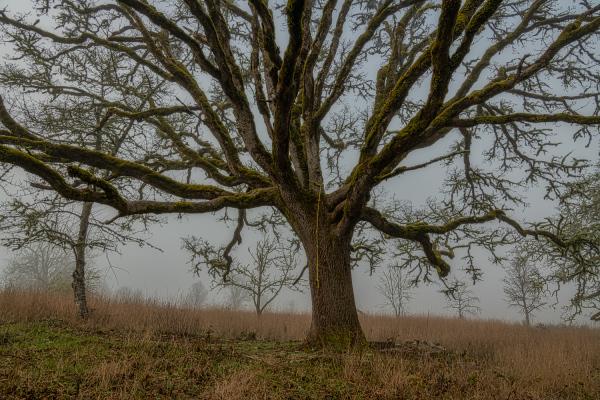 """Climbing Tree"""