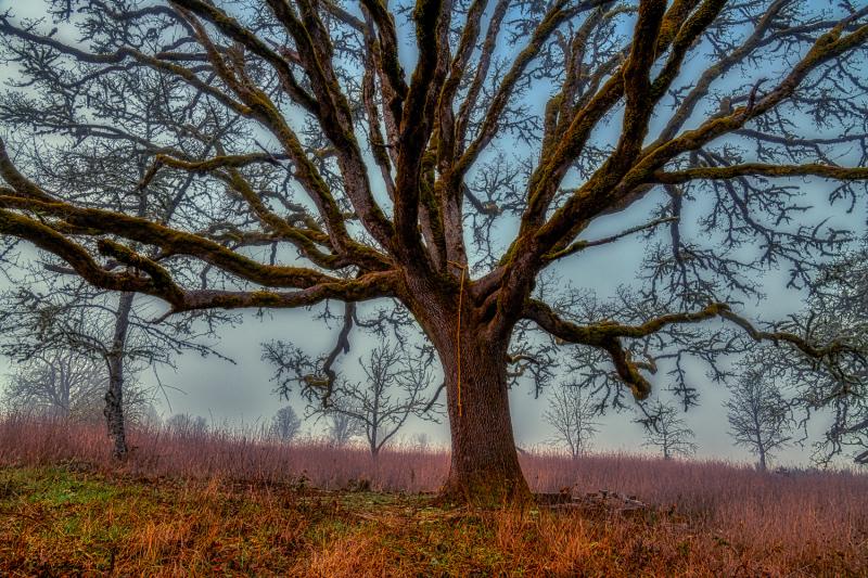 """Climbing Tree, painterly"""