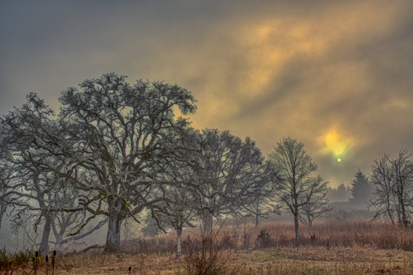 """""""Mystical Morning Painterly"""""""