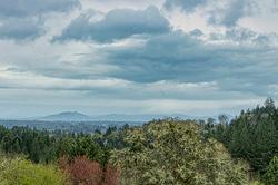 """Looking Toward the Cascades"""