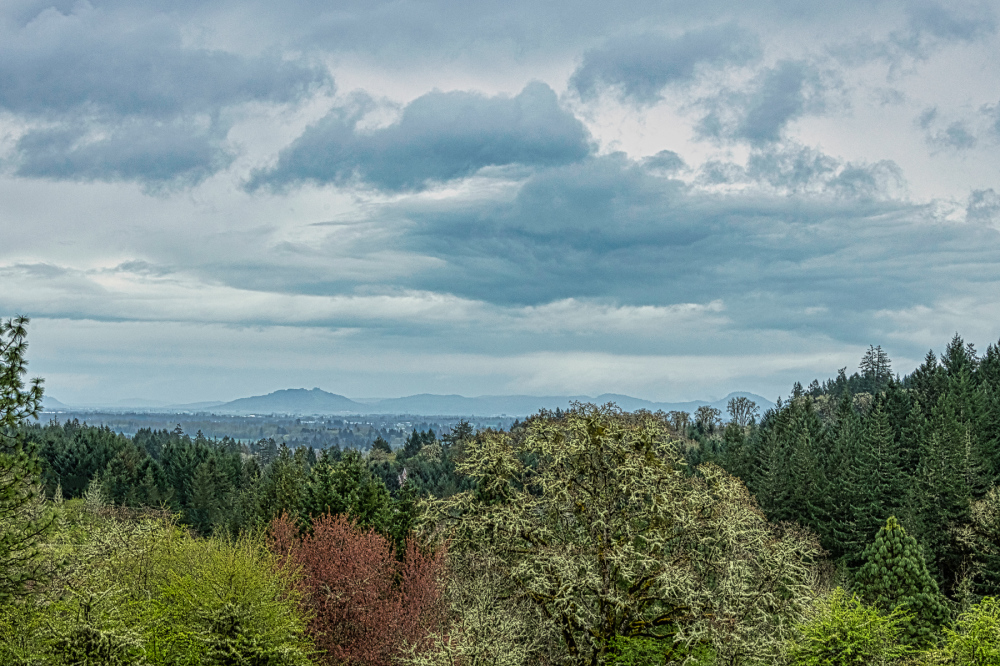 """Looking Toward the Cascades"""
