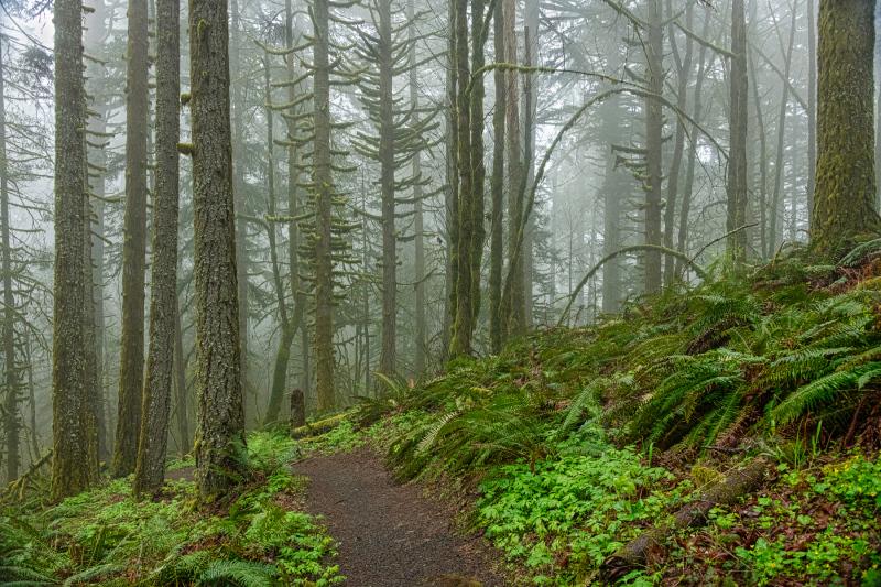 """Foggy Ridge Trail"""