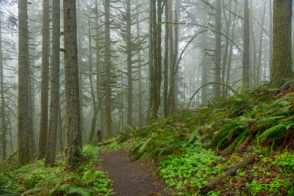 """Foggy Ridge Trail"""