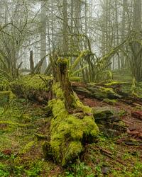 """""""Upper Ridge Trail Wabi Sabi"""""""