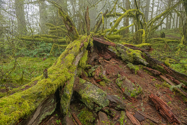 """Upper Ridge Trail Wabi Sabi, Closer"""