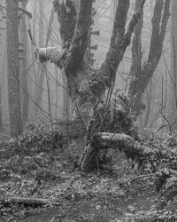 """Life Gathers Around Fallen Dead Tree BW"""