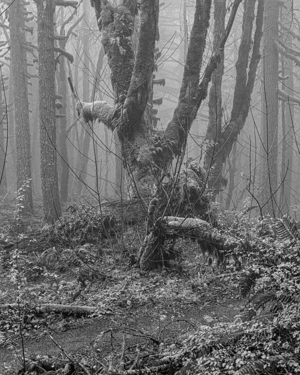 """Life Gathers Around Fallen Dead Tree BW"""