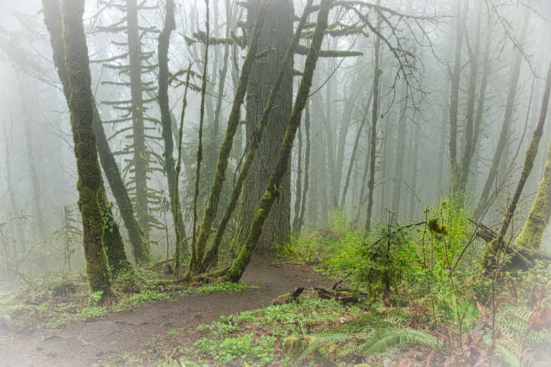 """Foggy Forest"""