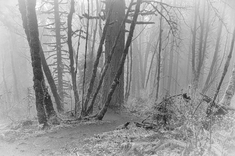 """""""Foggy Forest BW"""""""