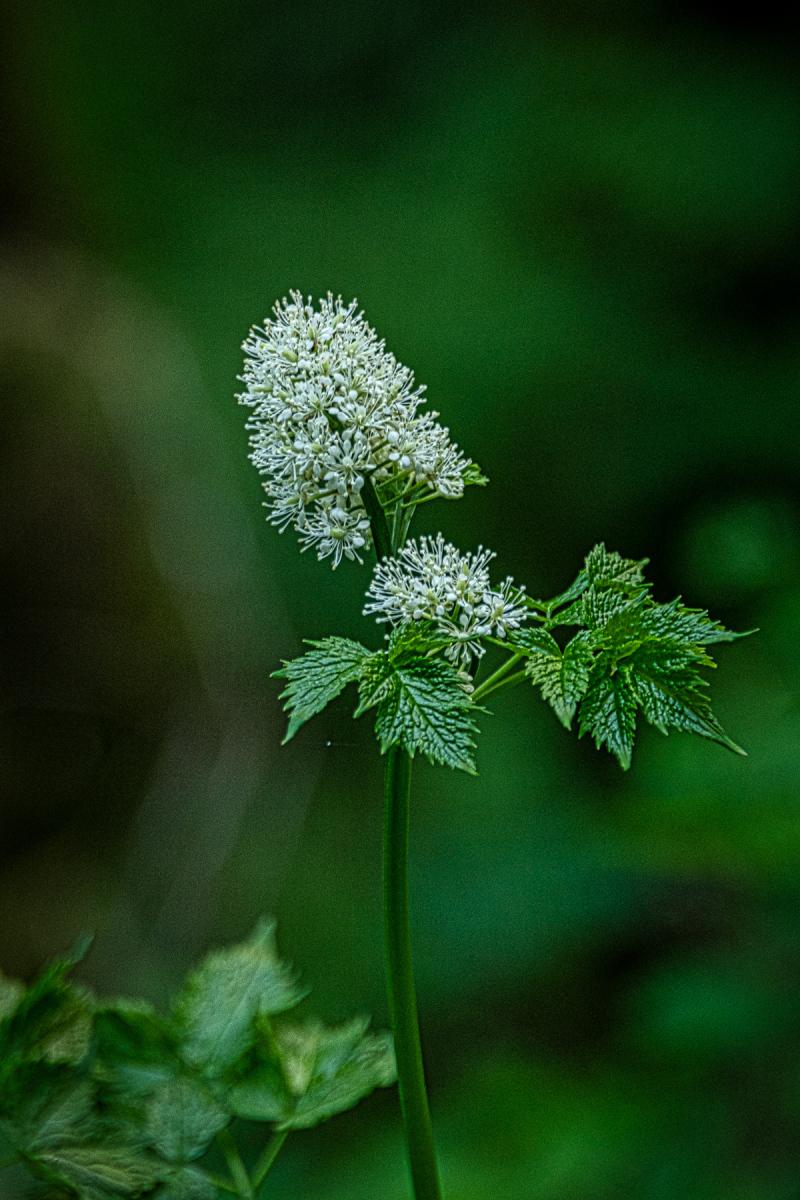 """""""Unusual Flower"""""""