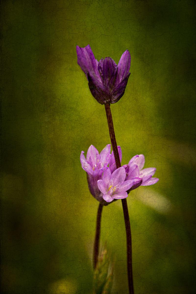 """Purple Delight"""