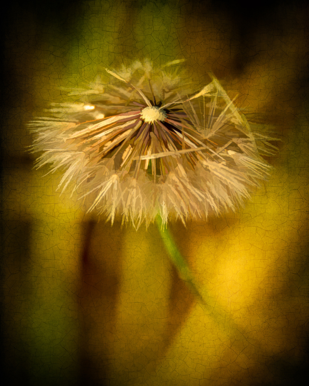"""Dandelion, painterly"""