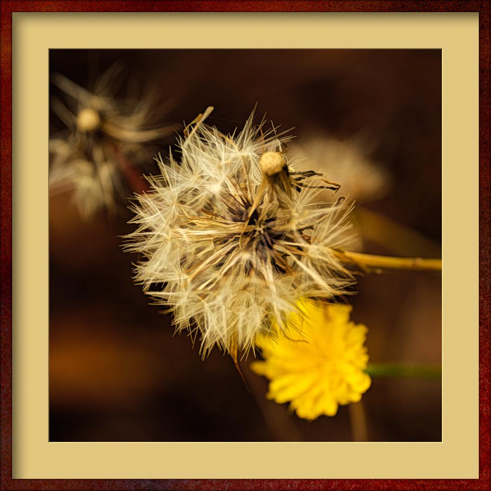 """Dandelion Art"""