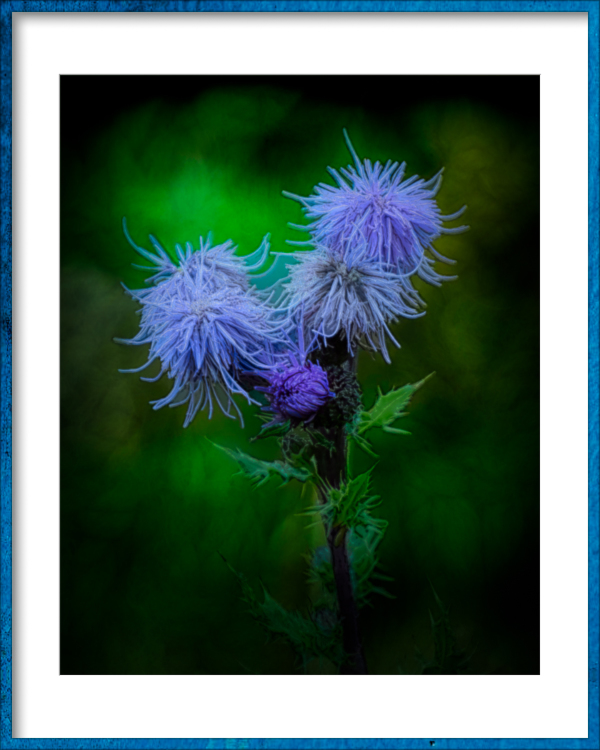 """Painterly Thistles"""