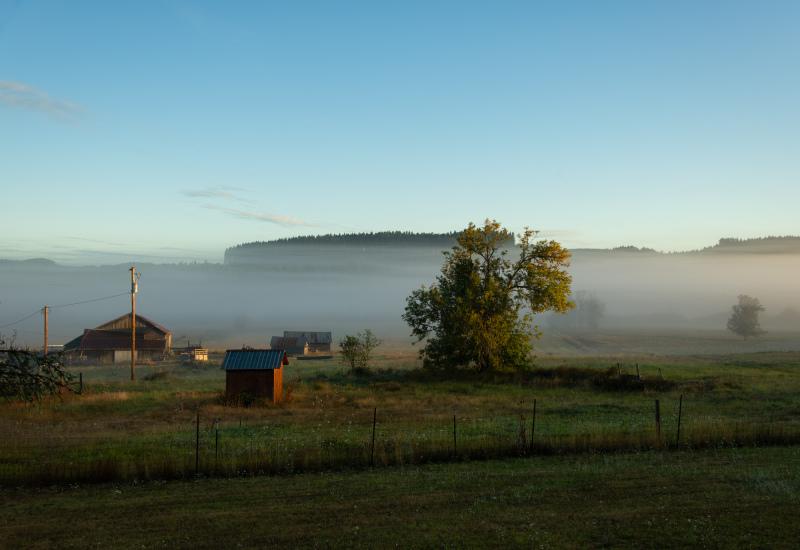 """""""Ground Fog #2"""""""