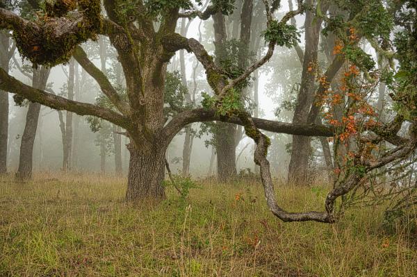 """Magical, Mystical Fog"""