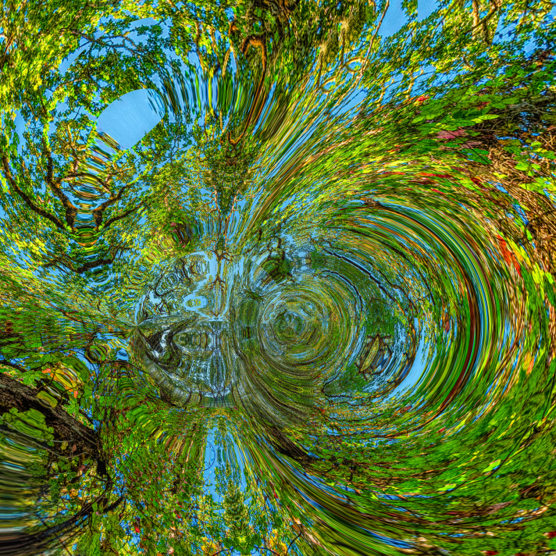 """""""Witham Hill Natural Park Abstract"""""""