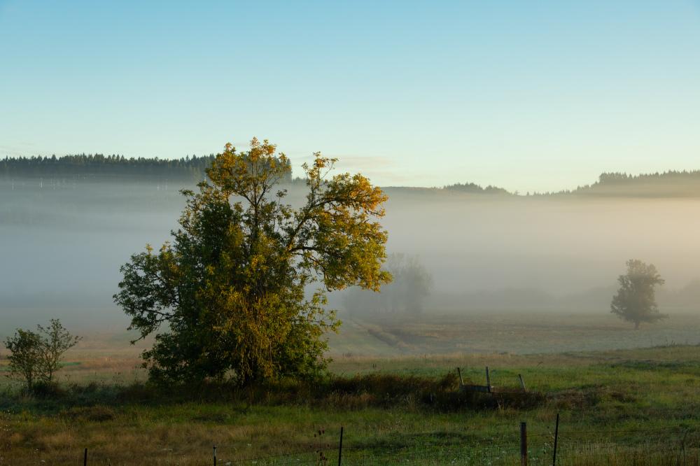 """Grround Fog"""