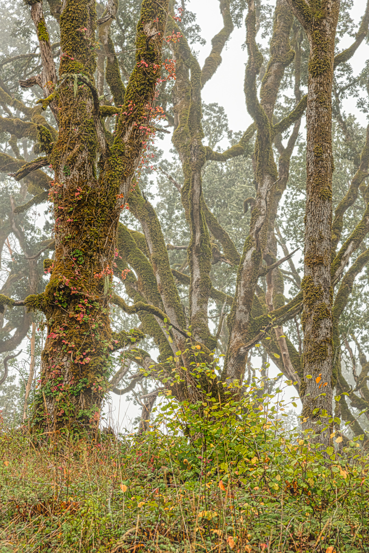 """Poison Oak"""