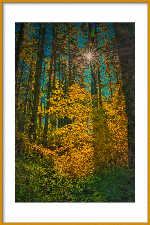 """Sunburst Silver Falls State Park"""