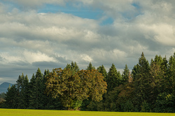 """""""Late Afternoon in the Willamette Valley"""""""