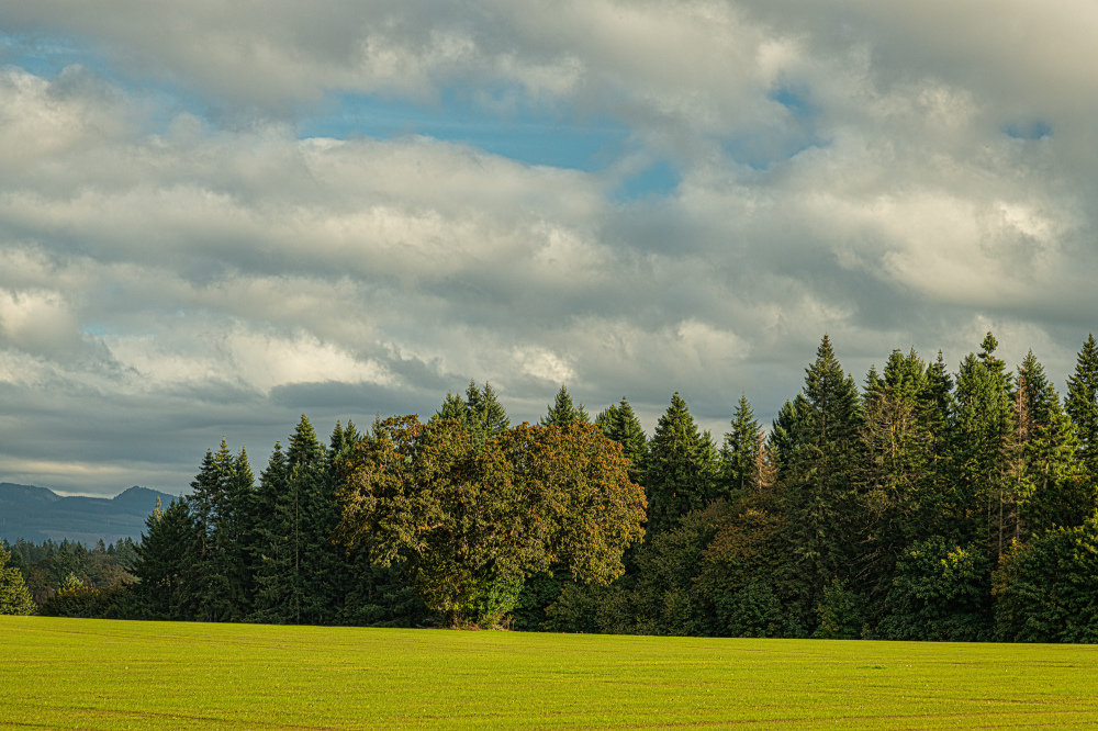 """Late Afternoon in the Willamette Valley"""