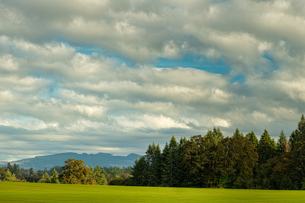 """Late Afternoon in the Willamette Valley #2"""
