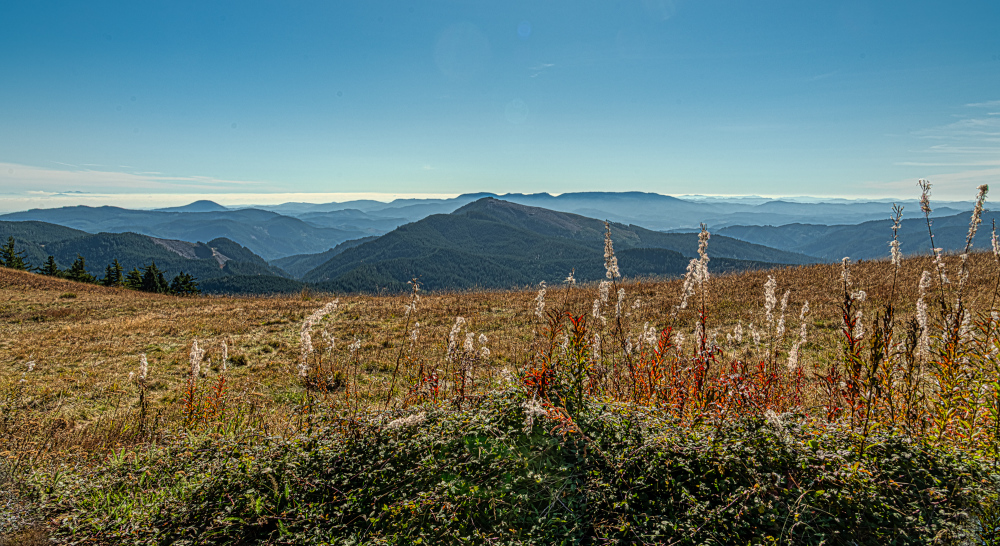 """""""Great View (almost to top, Marys Peak)"""""""