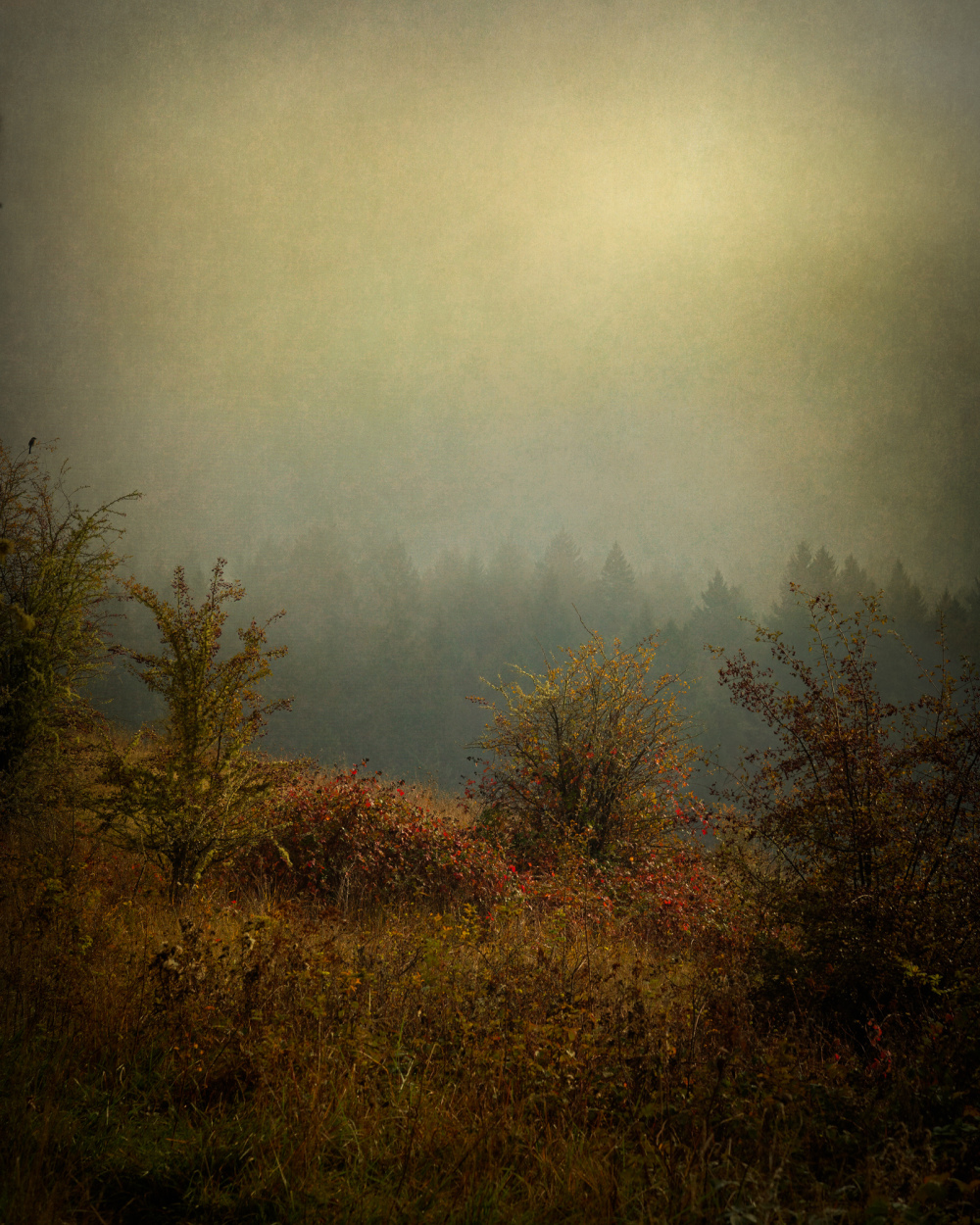 """Dense Warm Fog, Timberhill Natural Area"""