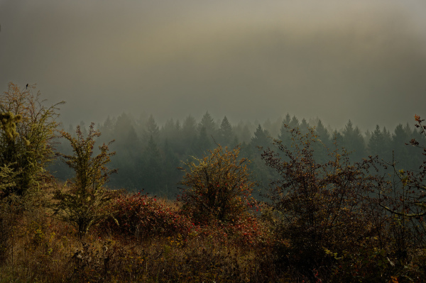 """""""Horizontal, Dense Warm Fog"""""""