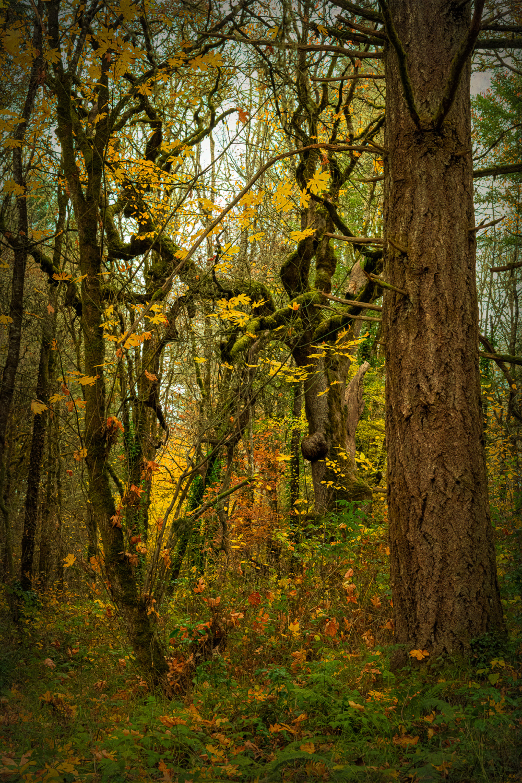 """Falling Leaves"""