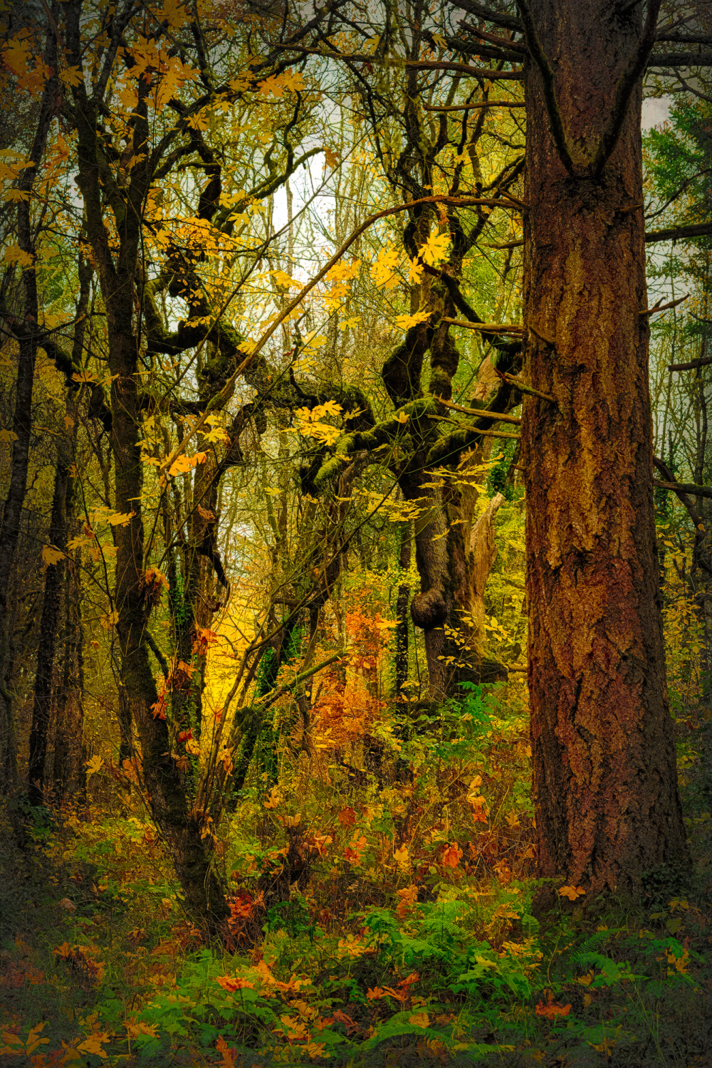 """""""Leaves Falling, Oil Painting"""""""