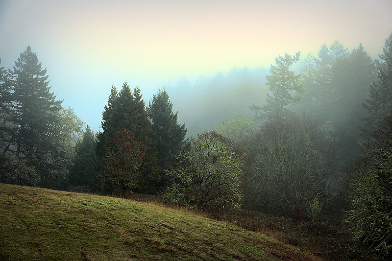 """""""Looking  Back Into the Fog, Painterly"""""""