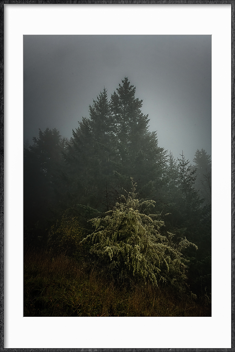 """Standing Out in Dense Fog"""