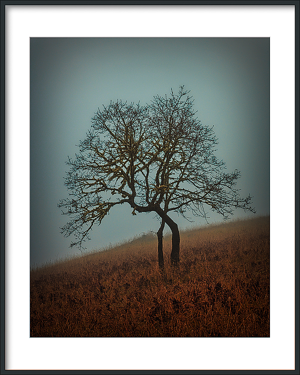 """Tree, Fog, Painterly"""