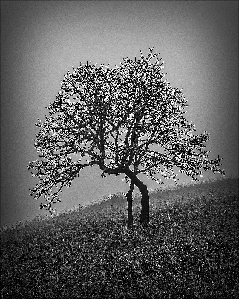 """Tree, Fog, Painterly, BW"""