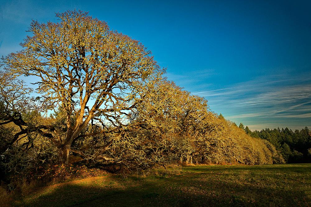 """Tree Border in the Sun"""