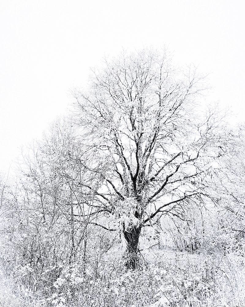 """""""Oak BW, Flypaper Riven Snow"""""""