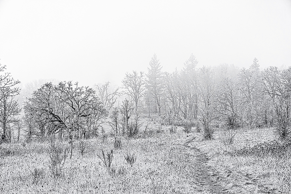 """""""Timberhill Natural Area Uphill BW"""""""