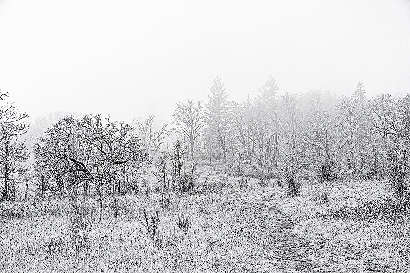 """Timberhill Natural Area Uphill BW"""