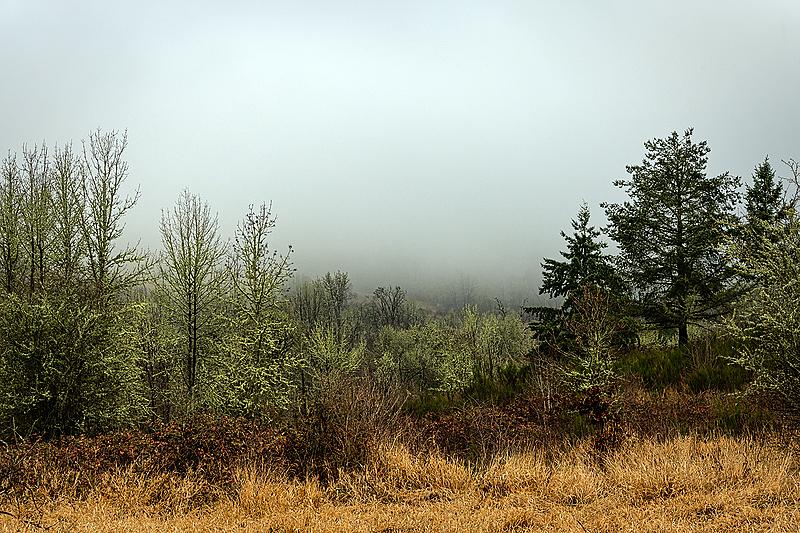 """""""Wonderful Winter Fog"""""""