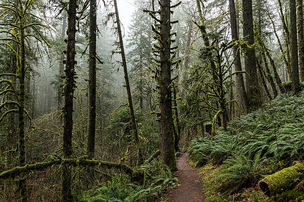 """""""Foggy Trail"""""""