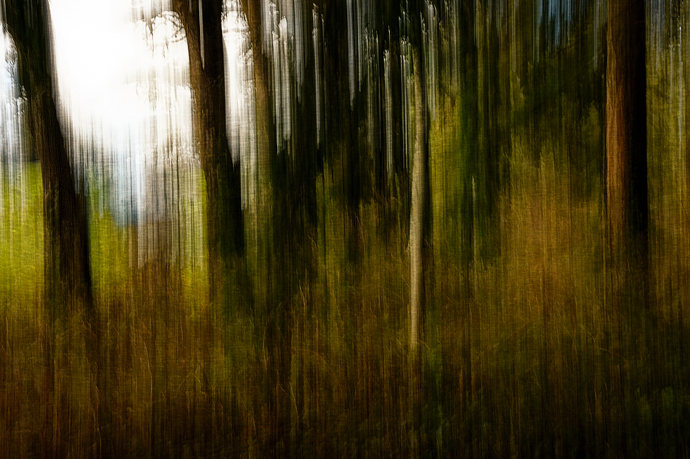"""ICM (Intentional Camera Movement), Dog Park"""