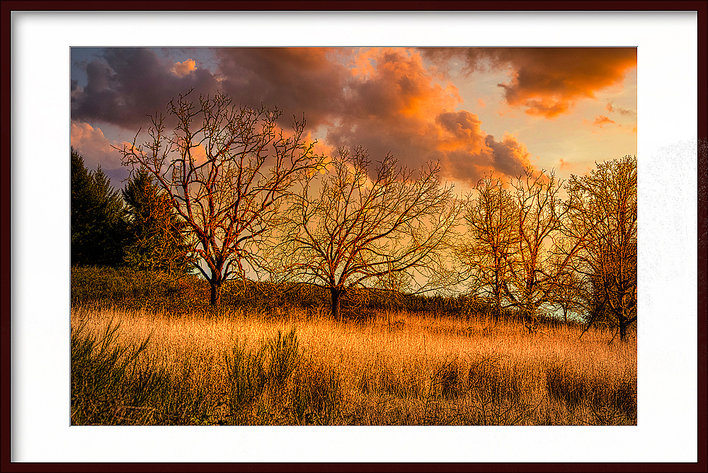 """Timberhill Natural Area Ridge, Golden Hour"""