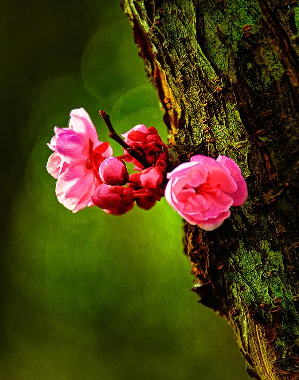 """It's Spring"""