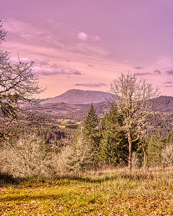 """Gold Gold-N-Blue Polarizer Version of Marys Peak"""