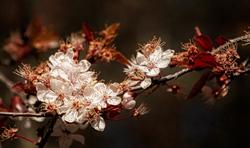 """Spring Flowers, Chip Ross Park"""