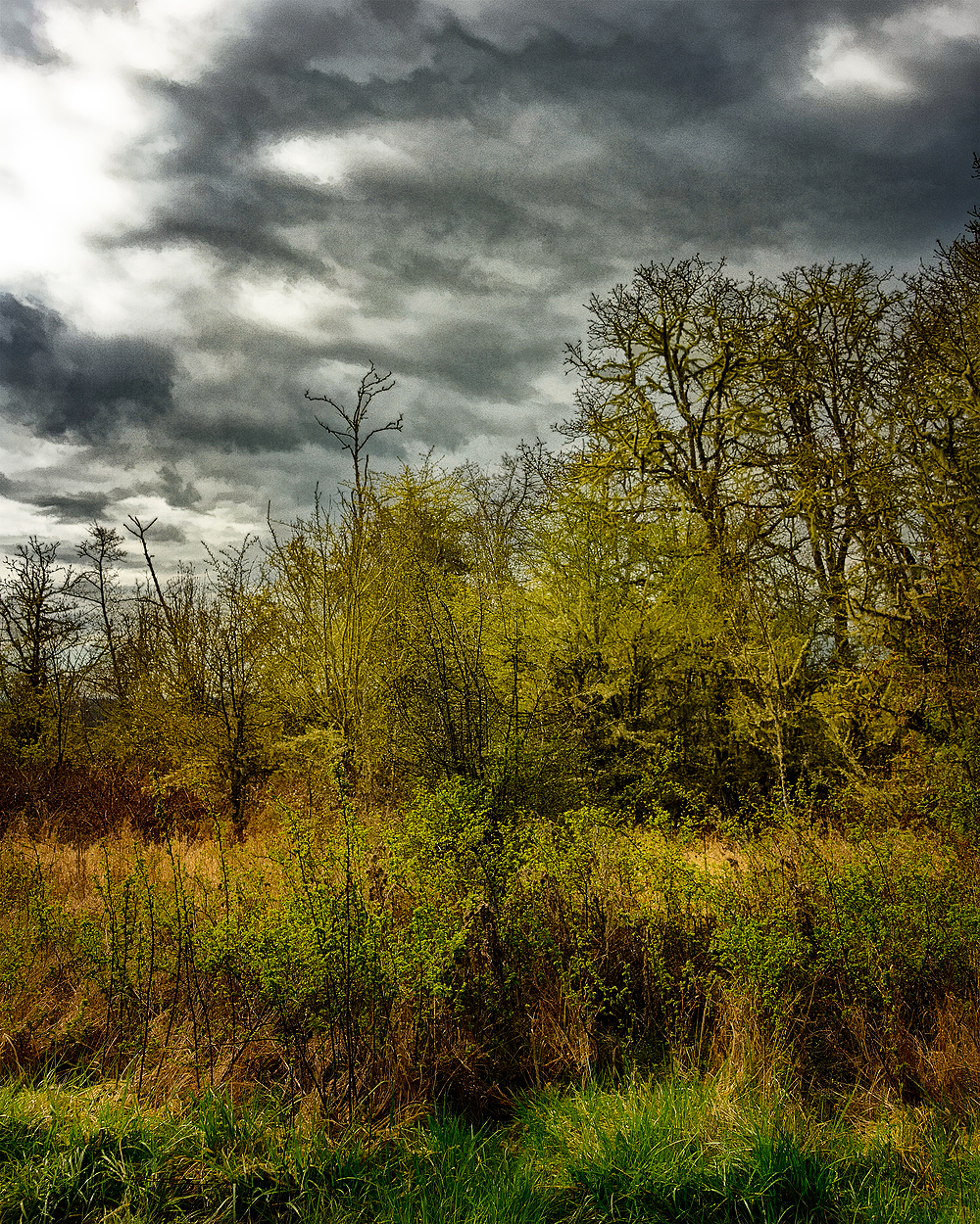 """Timberhill Natural Area, Painterly"""