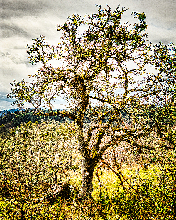 """My Tree & Rock"""